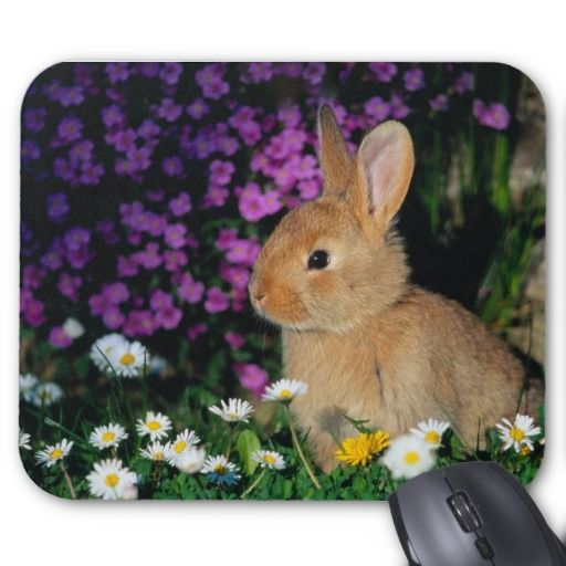 bunny mouse pad 3 | Zazzle.com