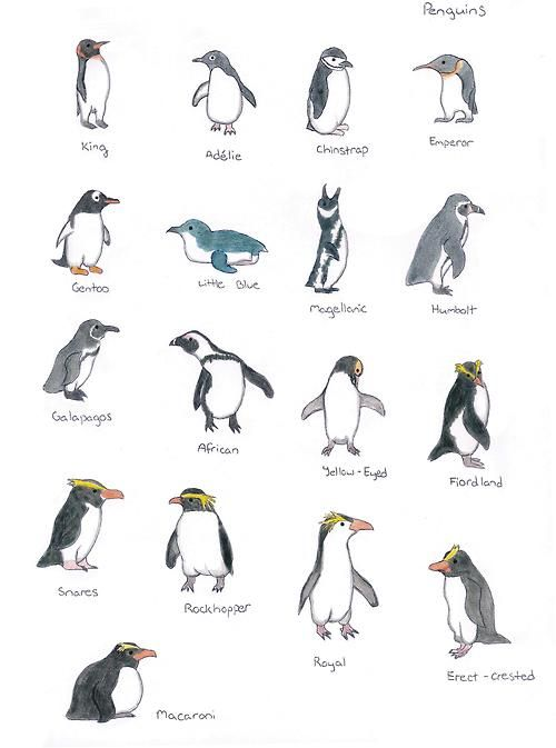 know all the different types of penguins