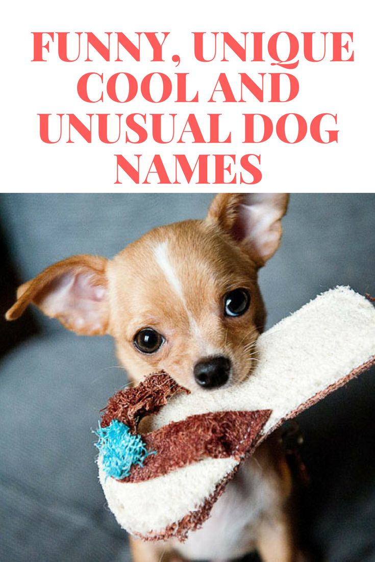 Dog Names Popular Male And Female Dog Names Unusual Dog Names Dog Names Dog Names Unique