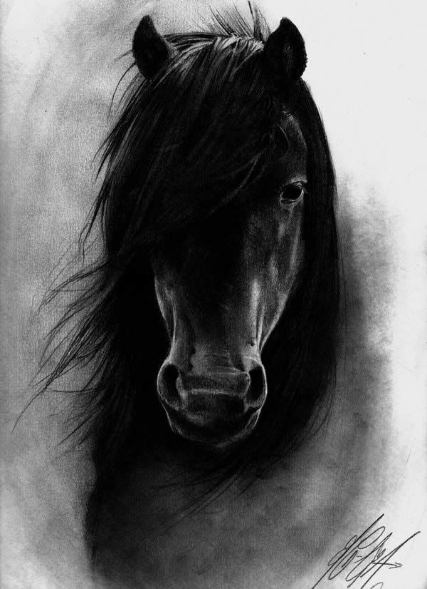 Horses - if God made anything more beautiful, he kept it for himself. this is absolutely amazing. i could never have such a dark tattoo, but maybe if they added some color too it, but it's just too great not to pin