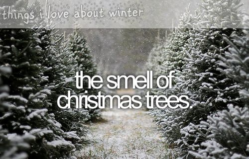 things i love about winter...that Christmas tree smell