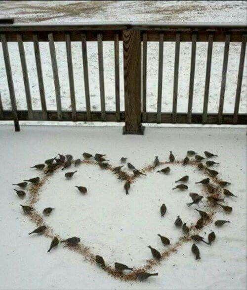 Bird seed in shape of a heart