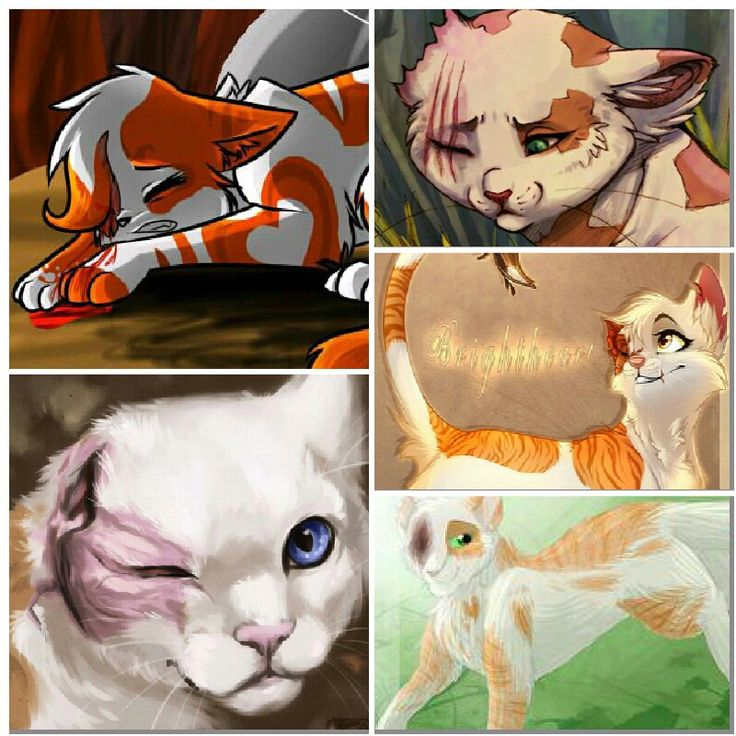 Book Trailer For Warriors Into The Wild: 17 Best Images About Brightheart On Pinterest