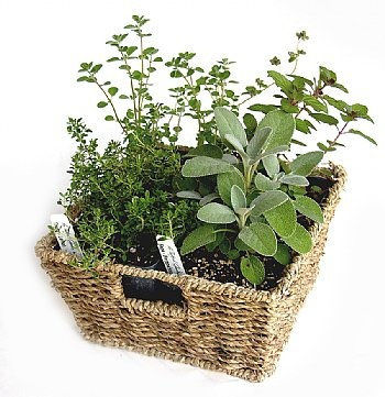 Garden Basket Ideas gardening themed gift baskets for mothers day Little Herb Garden Basket Comes With 4 Live Herb Plants
