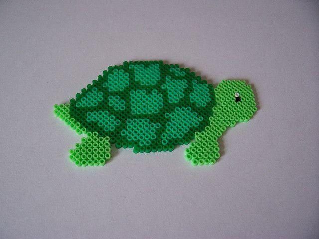 Tortoise   Flickr - Photo Sharing!