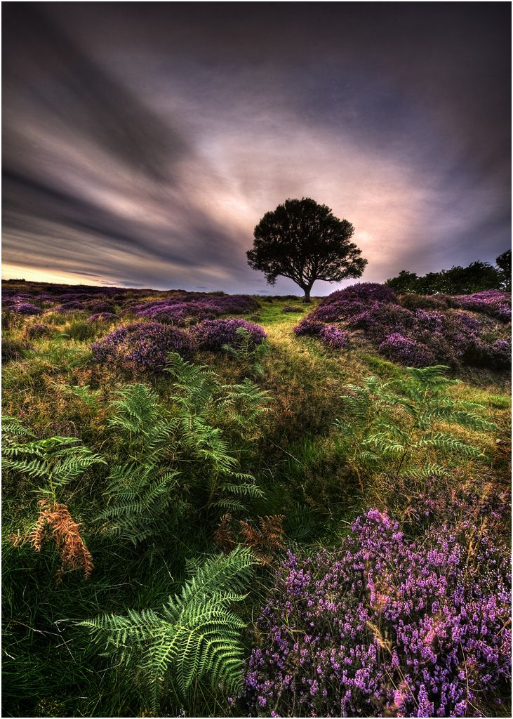 North Yorkshire Moor, England   I picture my completely, not wrecking the landscape, cottage by that tree!!