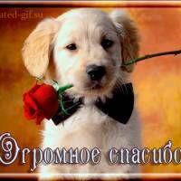 Огромное спасибо! - Огромное спасибо в гостевую. Анимационная картинка gif. Пёсик и роза.