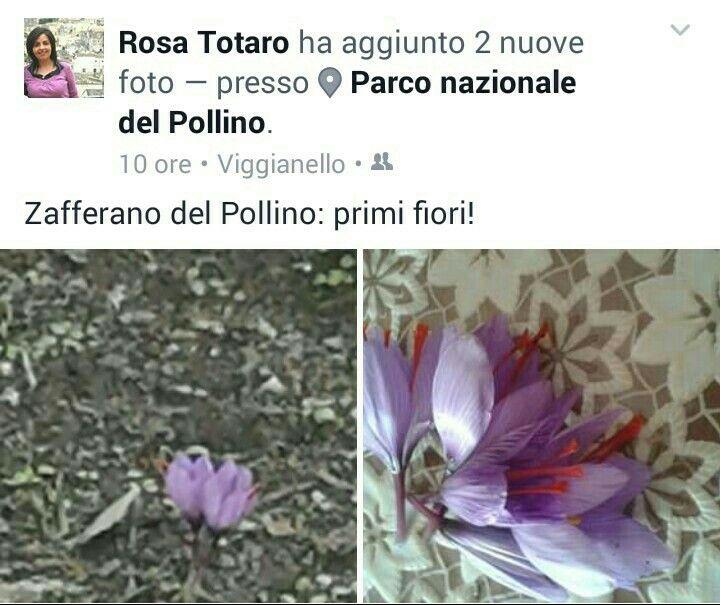 Qualcosa sta nascendo ... è una storia che vi ho già raccontato qui ... http://www.buatta.com/?p=1312 e che #capsam vorrebbe continuare a raccontarvi...a breve il ritorno del Lo #zafferano del #Pollino dell'Azienda Agricola Rosa Totaro su http://www.capsam.it/shop/index.php seguiteci ;)  #madeinitaly #ecommerce #basilicata #spezie #ororosso