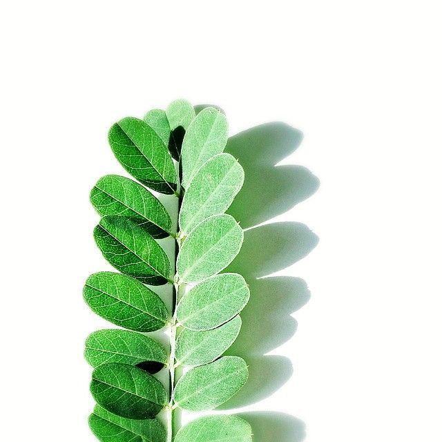green. photo: www.cultform.de instagram: @mimikri-im-miriquidi