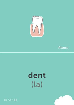 Dent #CardFly #flience #human #french #education #flashcard #language