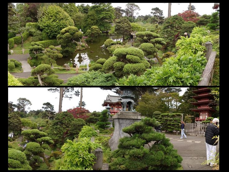 161 best images about san francisco japanese tea garden for Koi pond japanese tea garden san francisco