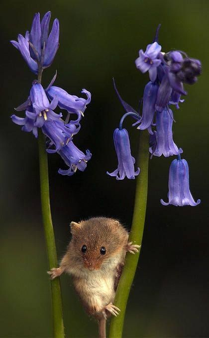 The bluebells are coming through now and I sometimes see 'my' basement mice in the sacks of bird seed