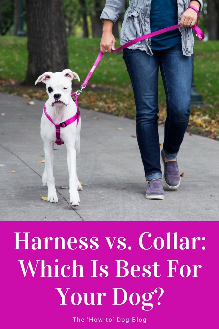 Harness Vs Collar Which Is Best For Your Dog Coconut Oil For