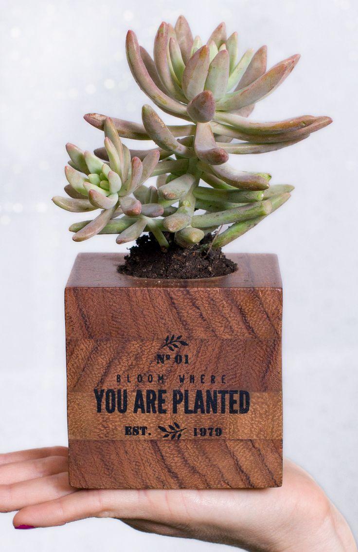 Mini maceta de #madera. Puedes acondicionarlo para ser el complemento perfecto para un pequeño #cactus o #suculenta.  | malabarista.com.mx