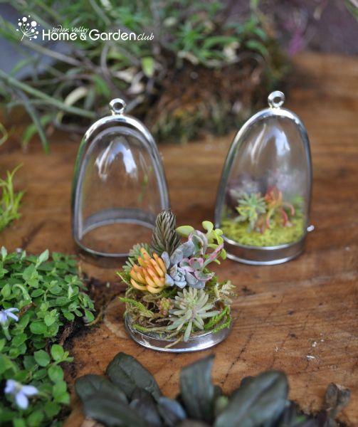 1000 Ideas About Mini Terrarium On Pinterest Marimo