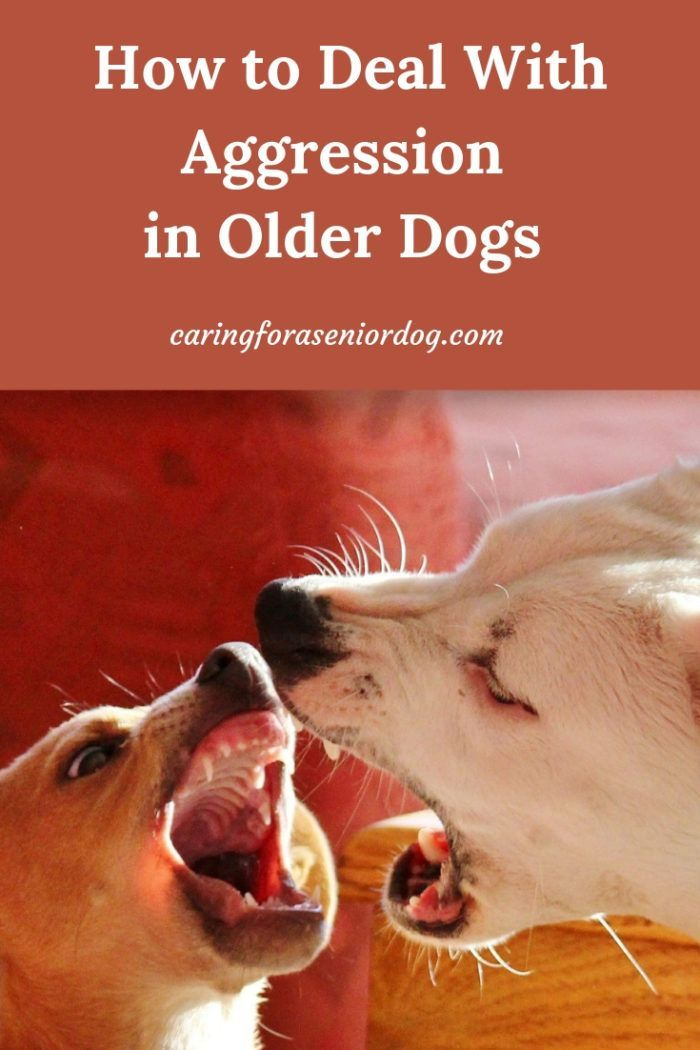 How To Deal With Aggression In Older Dogs Dog Care Dog Training