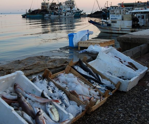 Fresh fish for sale at the harbour