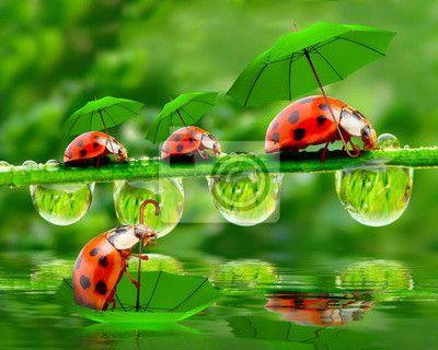 Stickers groene, help, helpend - regenachtige dag in de natuur. kleine lieveheersbeestjes met paraplu over de vijver. ✓ Brede keuze van materialen ✓ Het product aan je behoeften aangepast ✓ Bekijk de opinies van onze klanten!