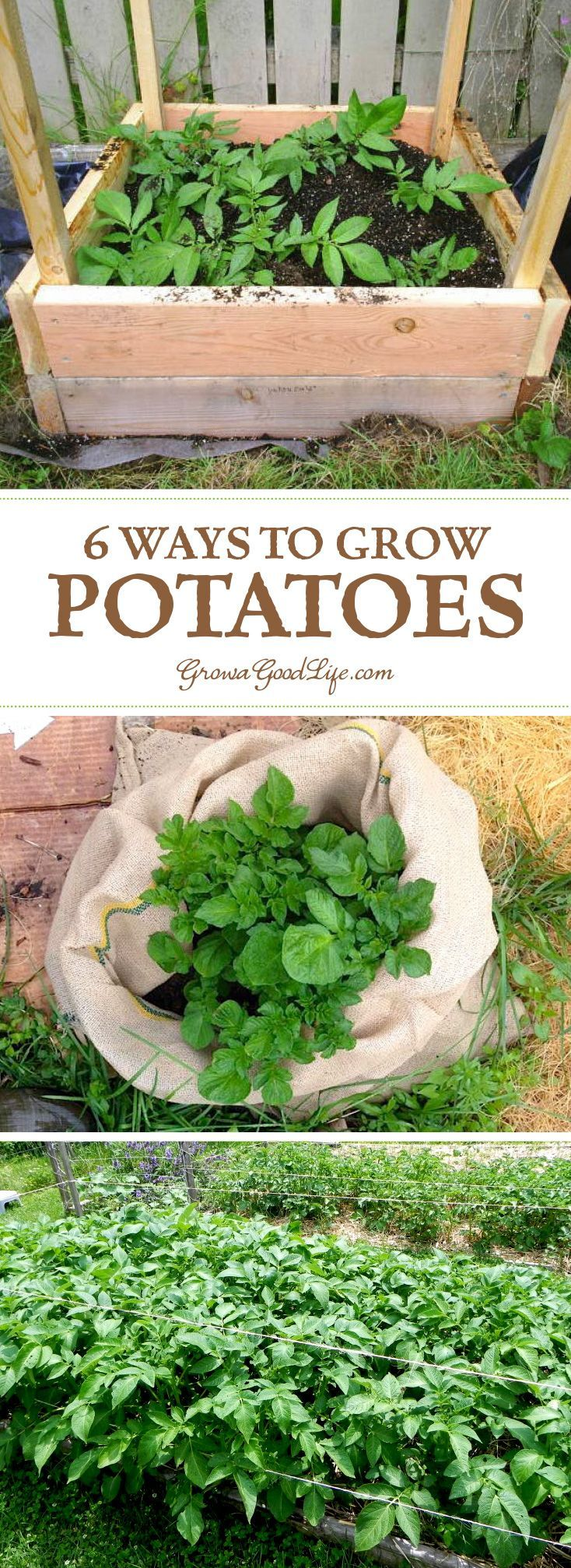 5953 best images about Vegetable Gardens Growing Food on