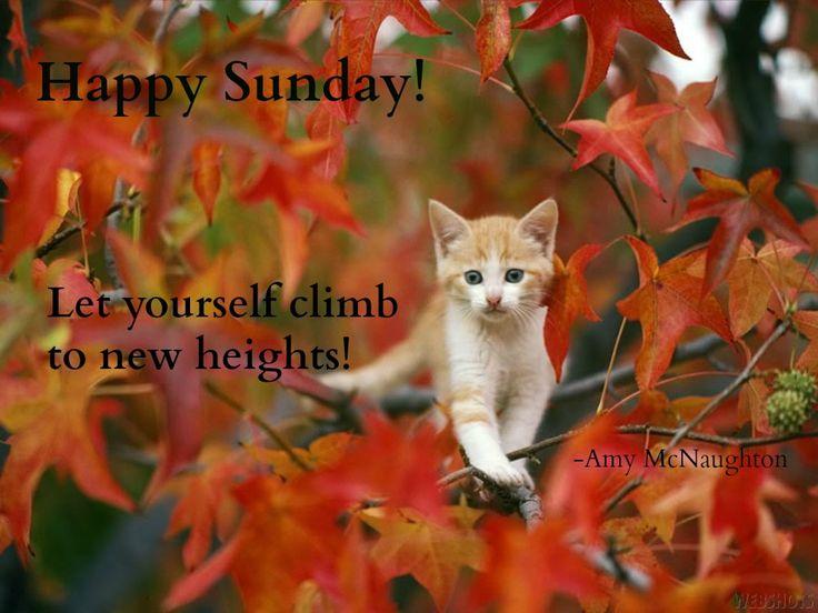 Bildergebnis für Happy Sunday with cats in Fall
