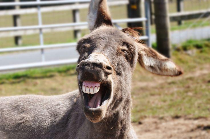 gotta love this donkey