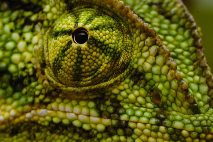 Unique animals with amazingly unusual eyes