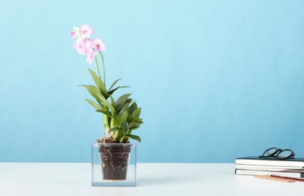Unique Planters That Solve Gardening Problems - Modern Indoor Gardening Ideas - Good Housekeeping