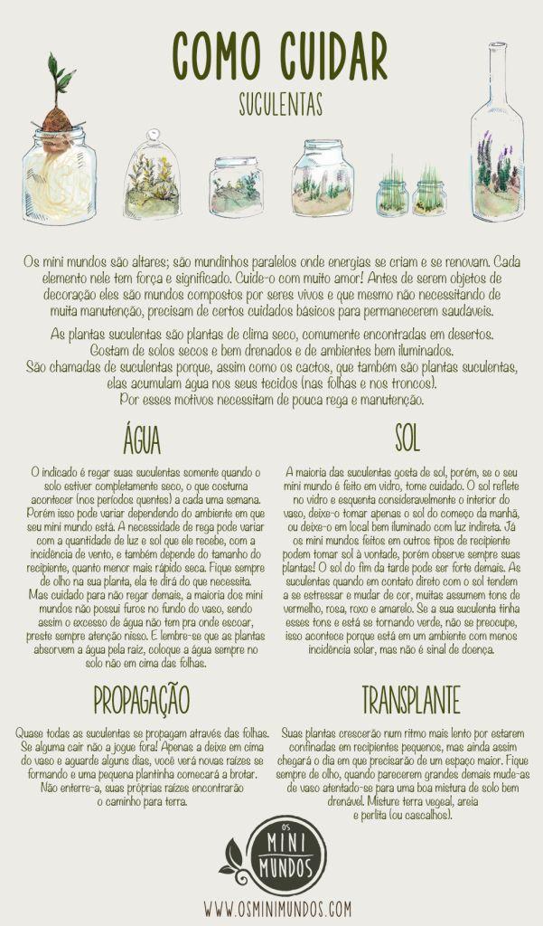 Suculentas e Cactos: Onde Comprar e Como Cuidar.