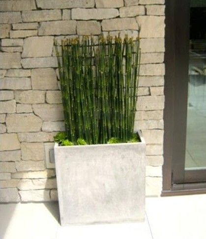 Snake grass and succulents in concrete planter