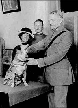 Sgt. Stubby PITBULL, He was solely responsible for capturing a German spy in the Argonne. Following the retaking of Château-Thierry by the US, the thankful women of the town made Stubby a chamois coat on which were pinned his many medals