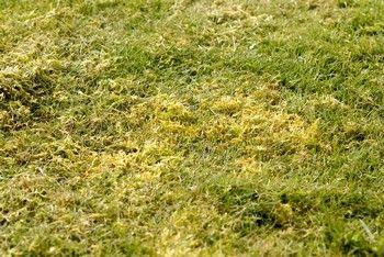 Scarifier sa pelouse pour la rénover | Jardipartage