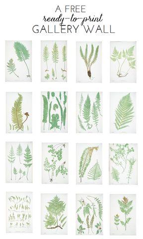 Free Ready-to-Print Gallery Wall: Fern Botanicals