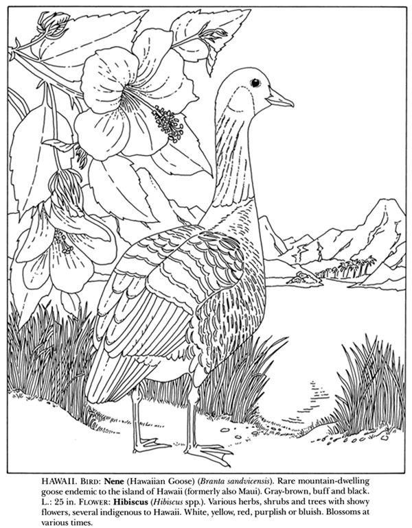 593 best Coloring pages to print - Birds images on Pinterest - best of coloring pages adults birds
