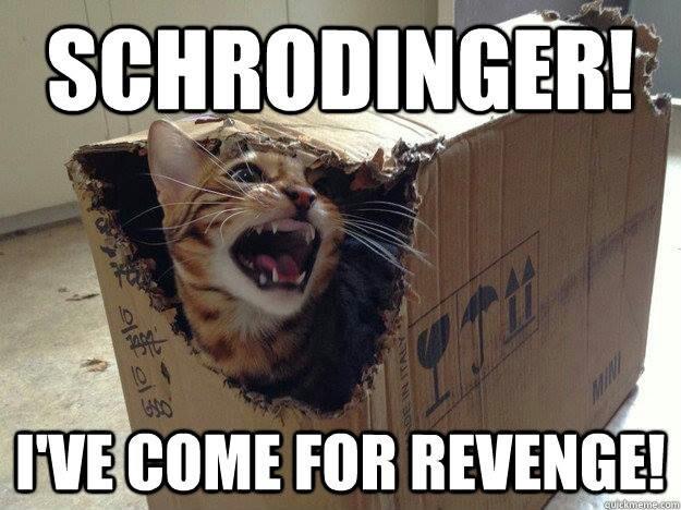 Cat In The Box Big Bang Theory