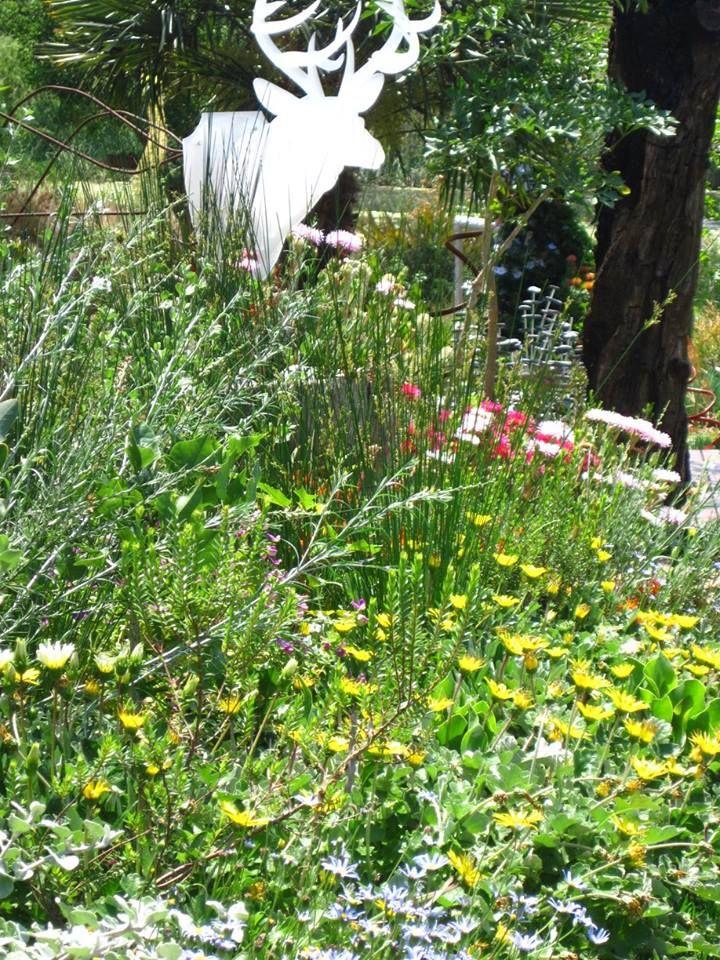 A 3D perspex and steel buck in the Fynbos garden