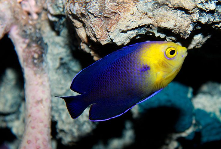 Selecting Fish for a Small Saltwater Aquarium
