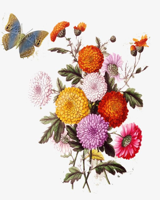 European Aesthetic Vintage Floral Pattern Flower Drawing Flower Painting Flower Drawing Tumblr