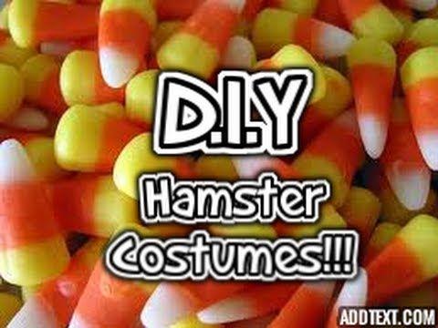 DIY Hamster Costumes! ♥