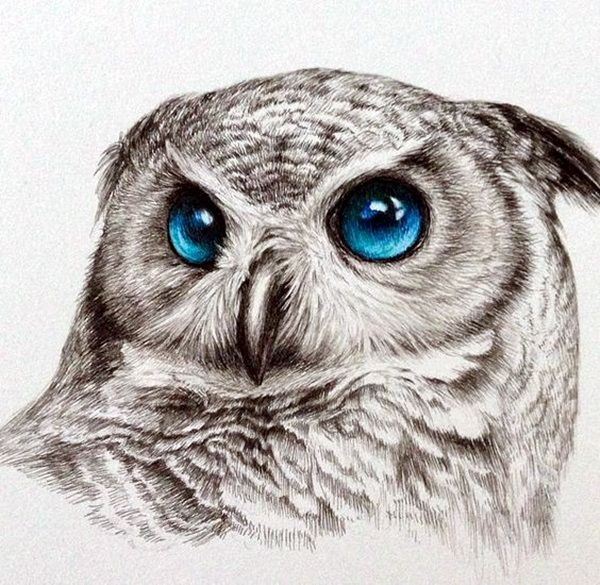 40 color pencil drawings to having you cooing with joy - Color Drawings