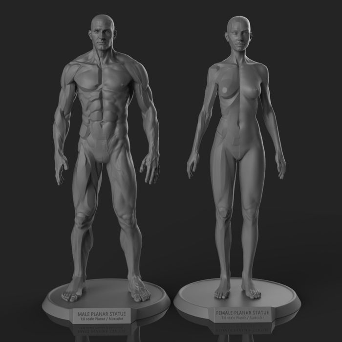 22 best Planar Reference images on Pinterest | Body reference ...