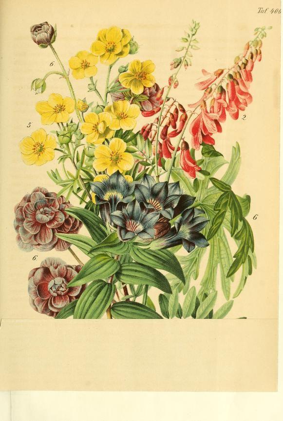 Unique Gartenflora zeitschrift f r garten und blumenkunde Volume bd
