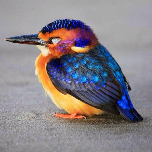 Bright bird, daaaaaaawww!