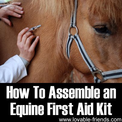 How To Assemble an Equine First Aid Kit   ►►http://www.lovable-friends.com/how-to-assemble-an-equine-first-aid-kit/?i=p