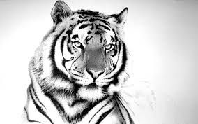 Image result for tiger's eyes tattoo
