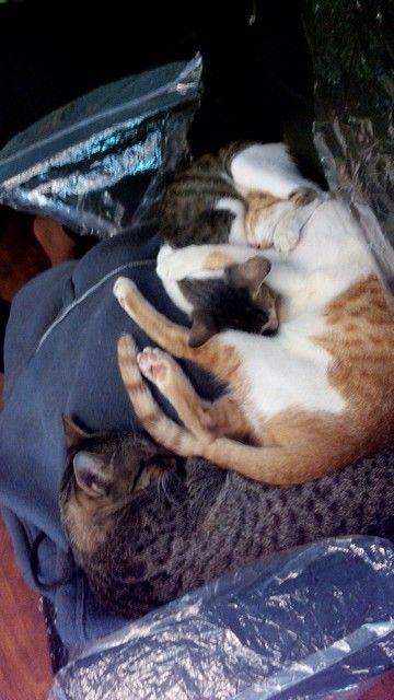 Nap time. #cats #sleep #dreaming