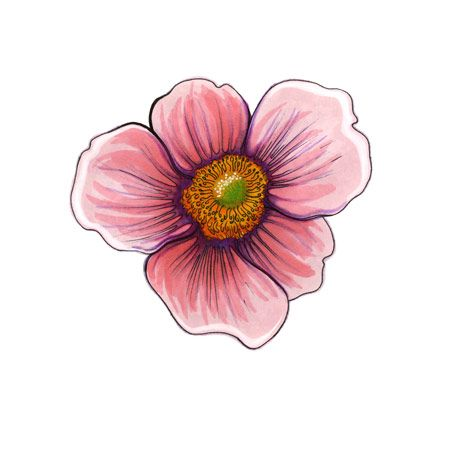 8 best flower drawings images on pinterest flower drawings flower httpdorkorbitimagesworkflowerdrawing mightylinksfo Images