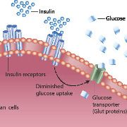 Diabète: découverte de gènes liés à la résistance à l'insuline