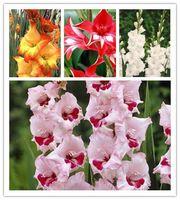 10 graines Glaïeul graines, glaïeul fleur graines, 95% la germination, rare épée lily graines