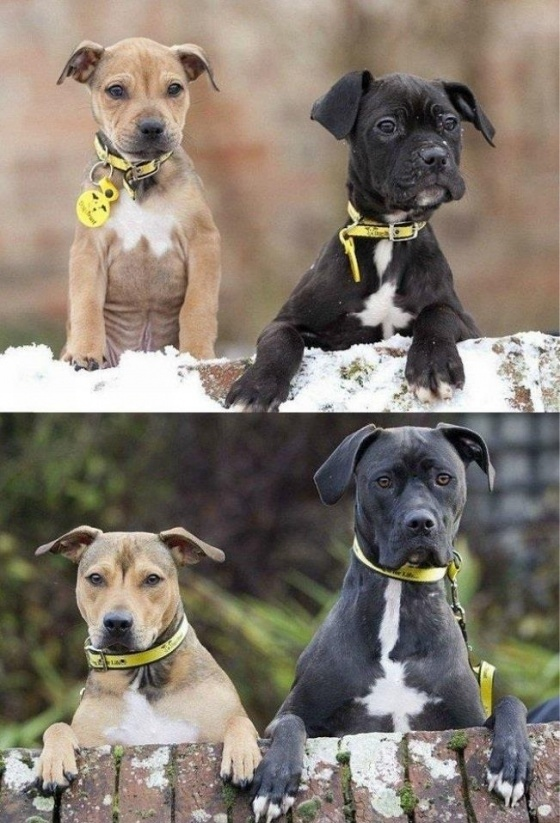 Same two dogs, 5 years later at same place