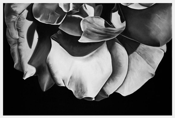 Kendall-Leigh Nash |Petals II| Art For Sale Online | StateoftheART